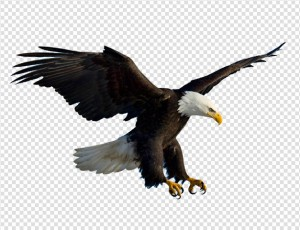 Eagle PNG - 13927
