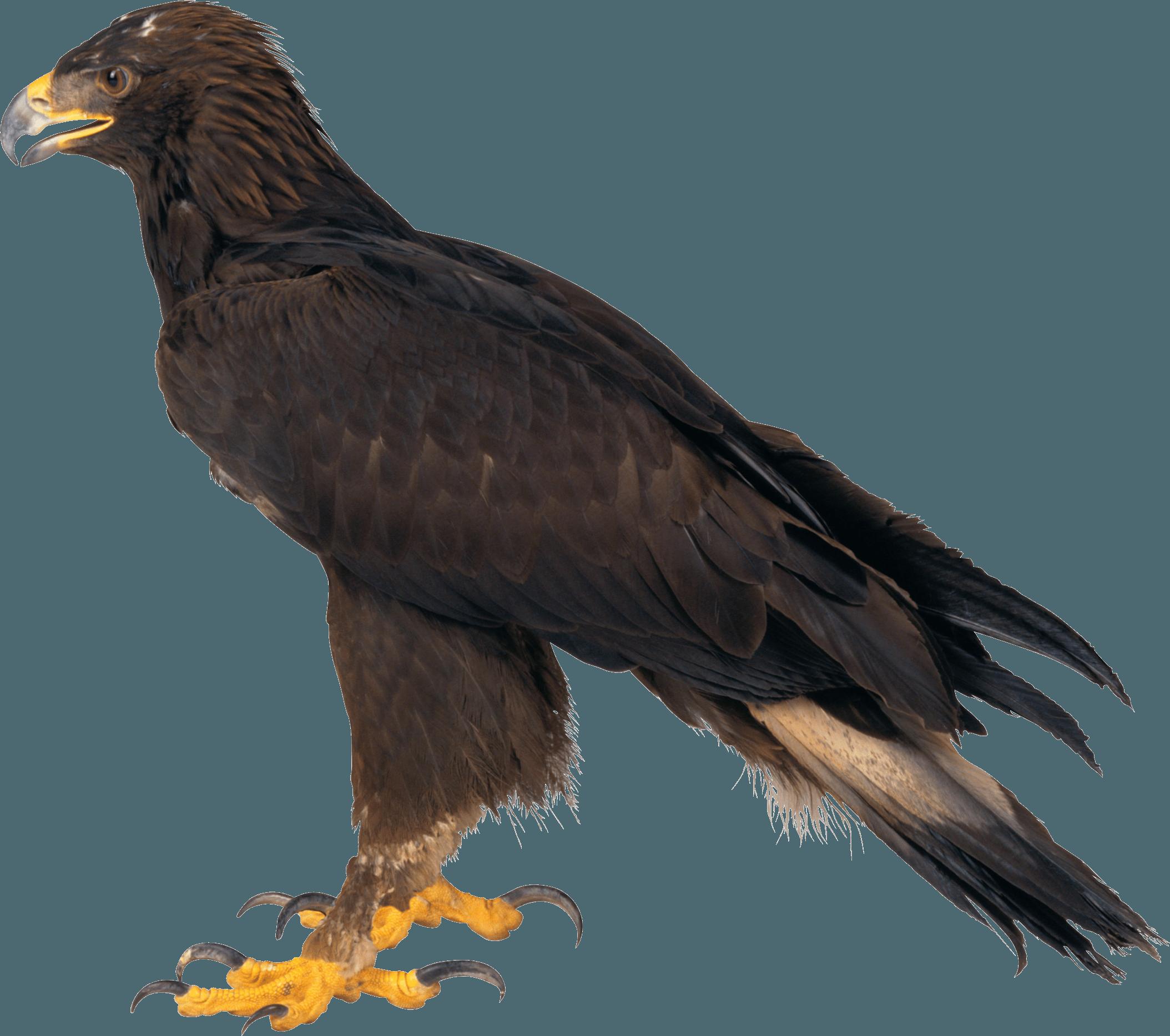Eagle PNG - 26777