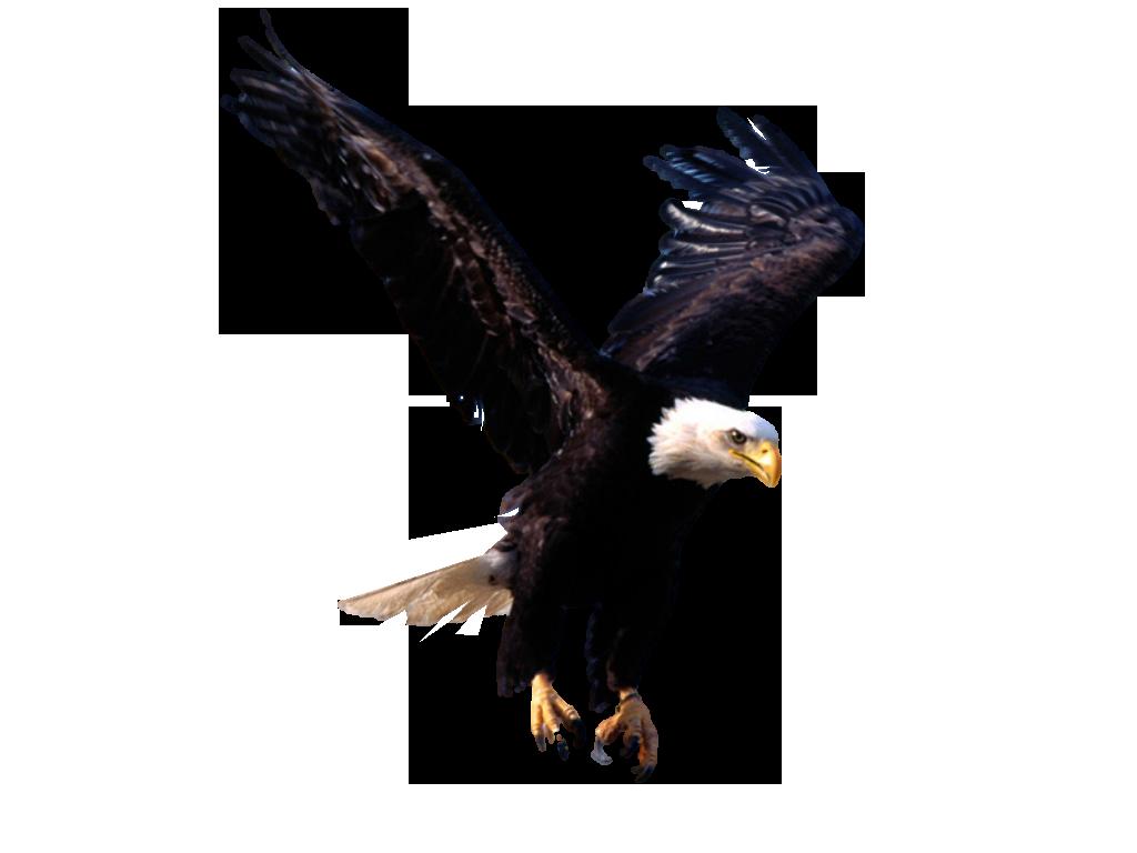 Eagle PNG - 13924
