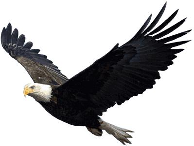Eagle PNG - 13921