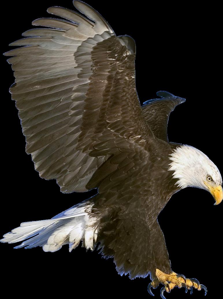 Eagle PNG - 13933