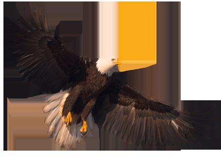 Eagle PNG - 26776