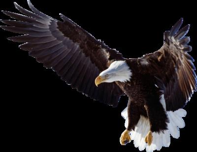 Eagle PNG - 26779