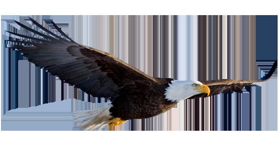 Flying Eagle Transparent Background - Eagle PNG