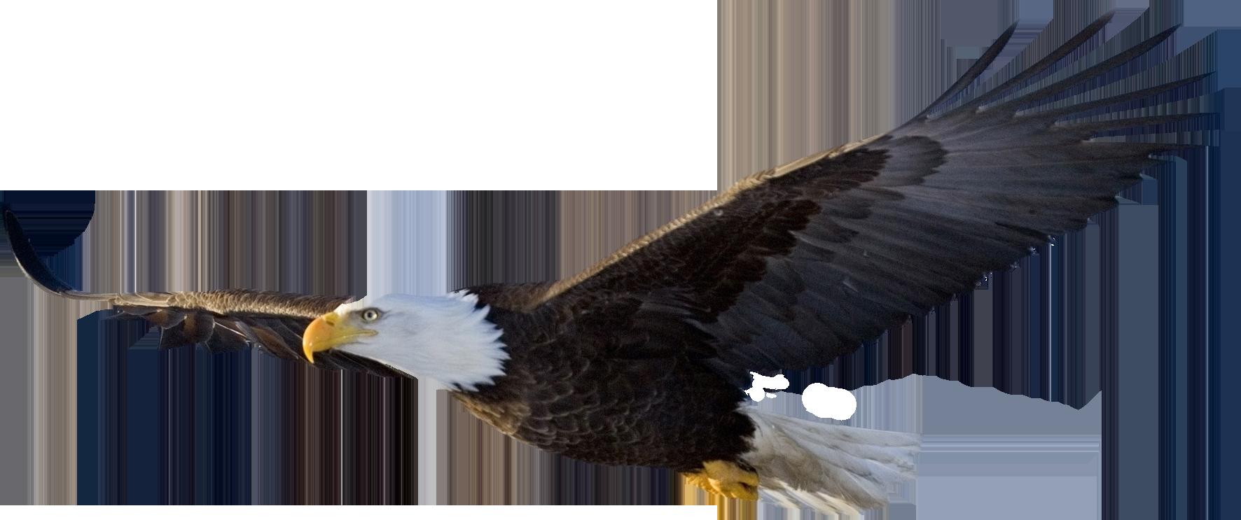 Bald Eagle PNG File - Eagle PNG HD