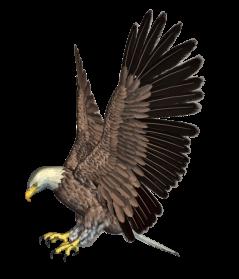 Eagle PNG HD - 136176