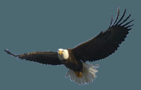 Download PNG image - Flying Eagle Png Image Download 403 - Eagle PNG HD