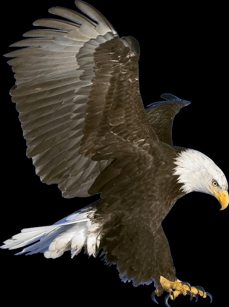 Eagle PNG HD - 136168