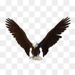 Eagle PNG HD - 136178
