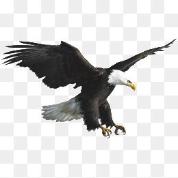 Eagle PNG HD - 136173