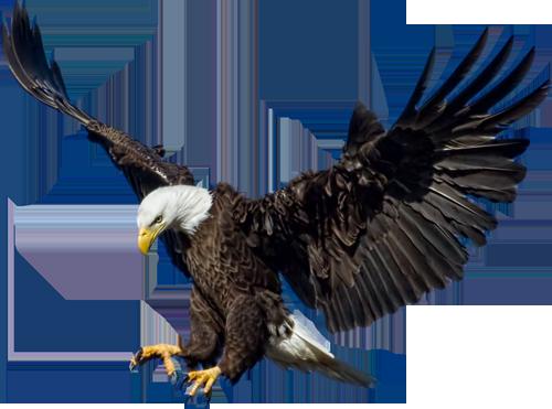 Eagle PNG HD - 136172