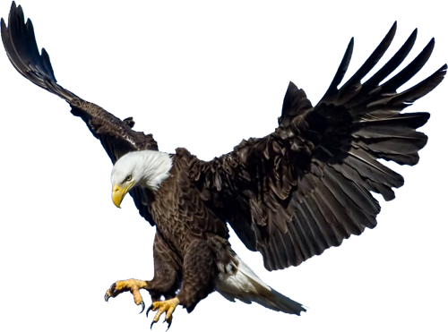 Eagle Png 3 PNG Image - Eagle PNG HD