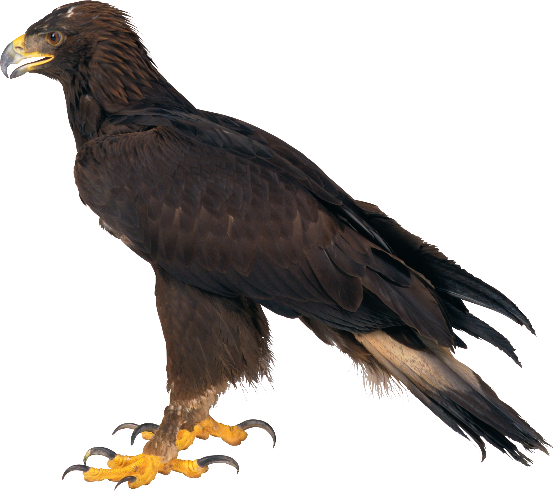 Eagle PNG HD Transparent Eagle HD.PNG Images. | PlusPNG