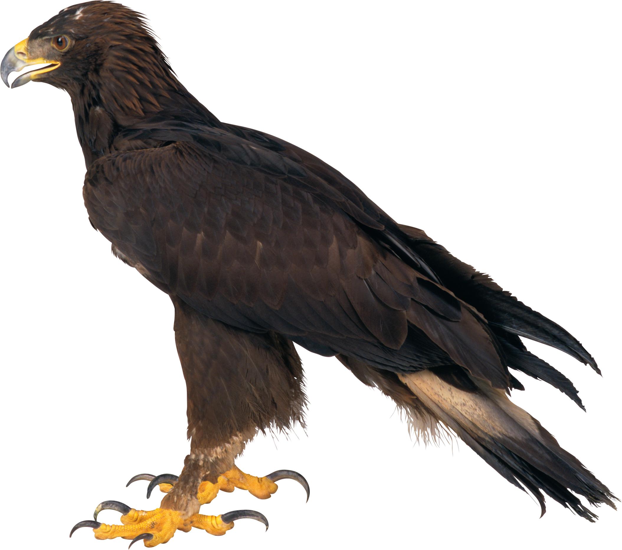 Eagle PNG HD - 136171