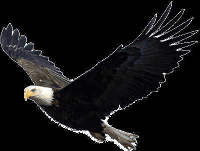 Flying Eagle - Eagle PNG HD