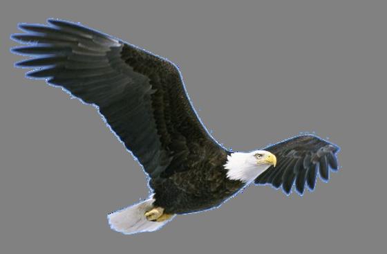 Eagle PNG HD - 136179