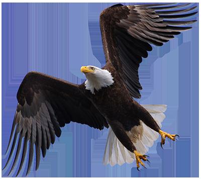 Eagle PNG - 13934