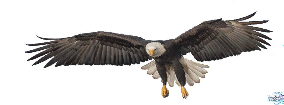 PNG File Name: Flying Eagle PlusPng.com  - Eagle PNG