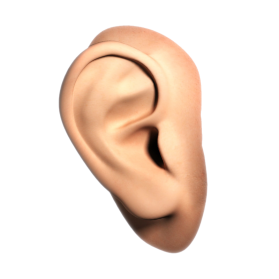 Human Ear PNG File - Ear HD PNG