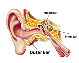 Ear HD PNG-PlusPNG pluspng.com-300 - Ear HD PNG - Ear Listening PNG HD