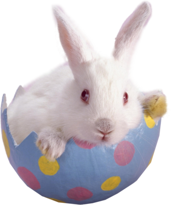 Easter Bunny PNG - 7729