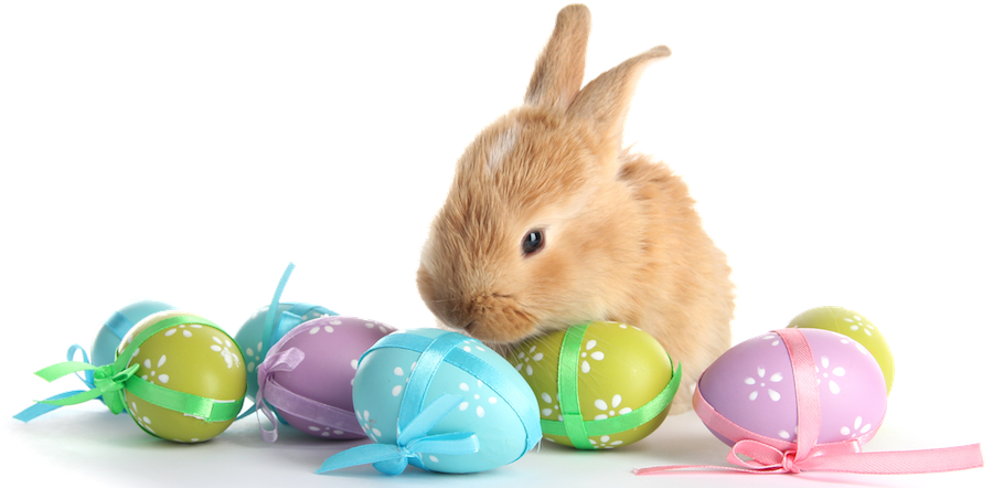 Easter - Marges Specialties - Easter Bunny With Eggs PNG