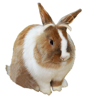 Easter hare with umbrella PNG PlusPng.com  - Rabbit PNG