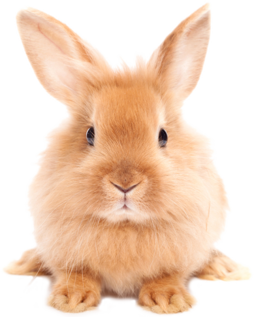 Easter Rabbit PNG HD - Easter HD PNG