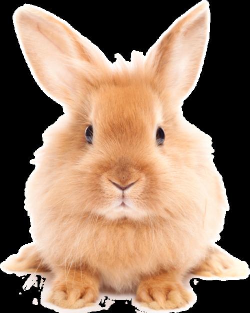 Easter Rabbit PNG HD - Rabbit PNG
