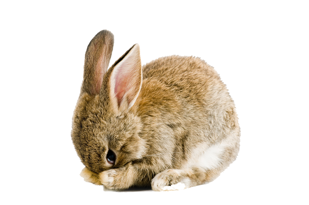 Easter Rabbit PNG Pic - Rabbit PNG