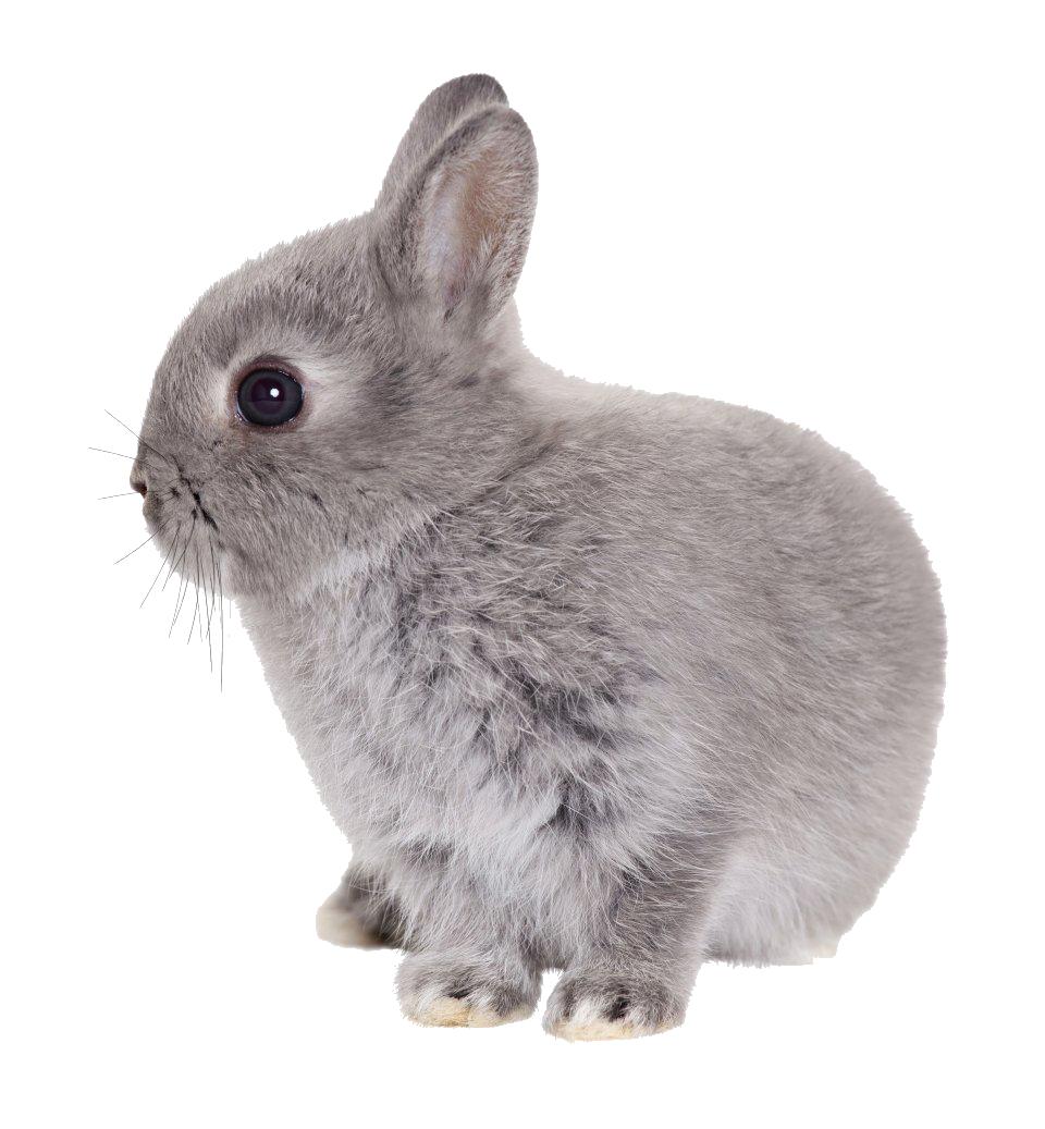 Rabbit PNG - 2872