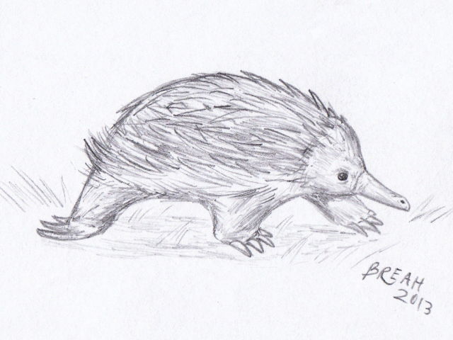 Echidna PNG Black And White-P