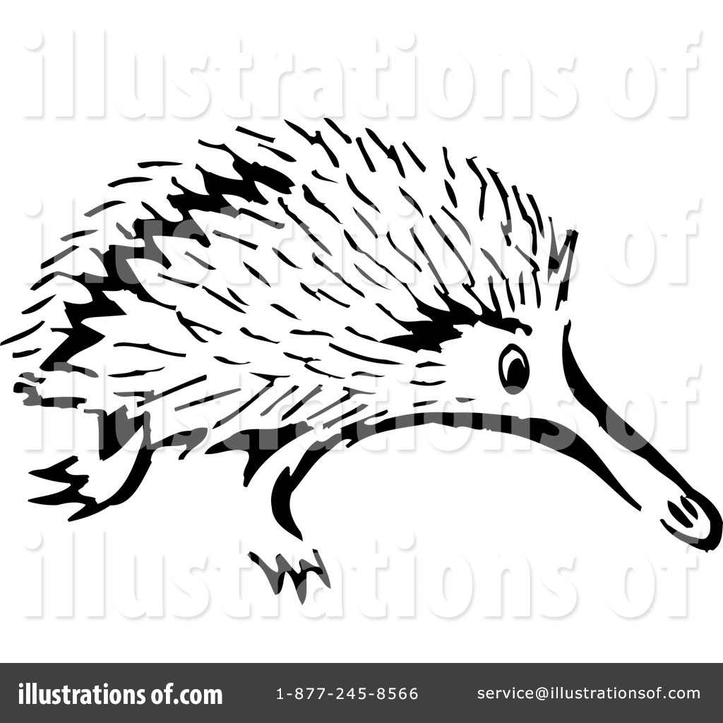 pin Porcupine clipart echidna #6 - Echidna PNG Black And White