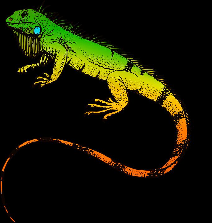 Reptilien, Leguan, Tier, Natu
