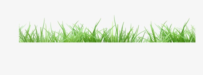 Fresh grass edging, Grass, Fresh, Trim Free PNG Image - Edging PNG