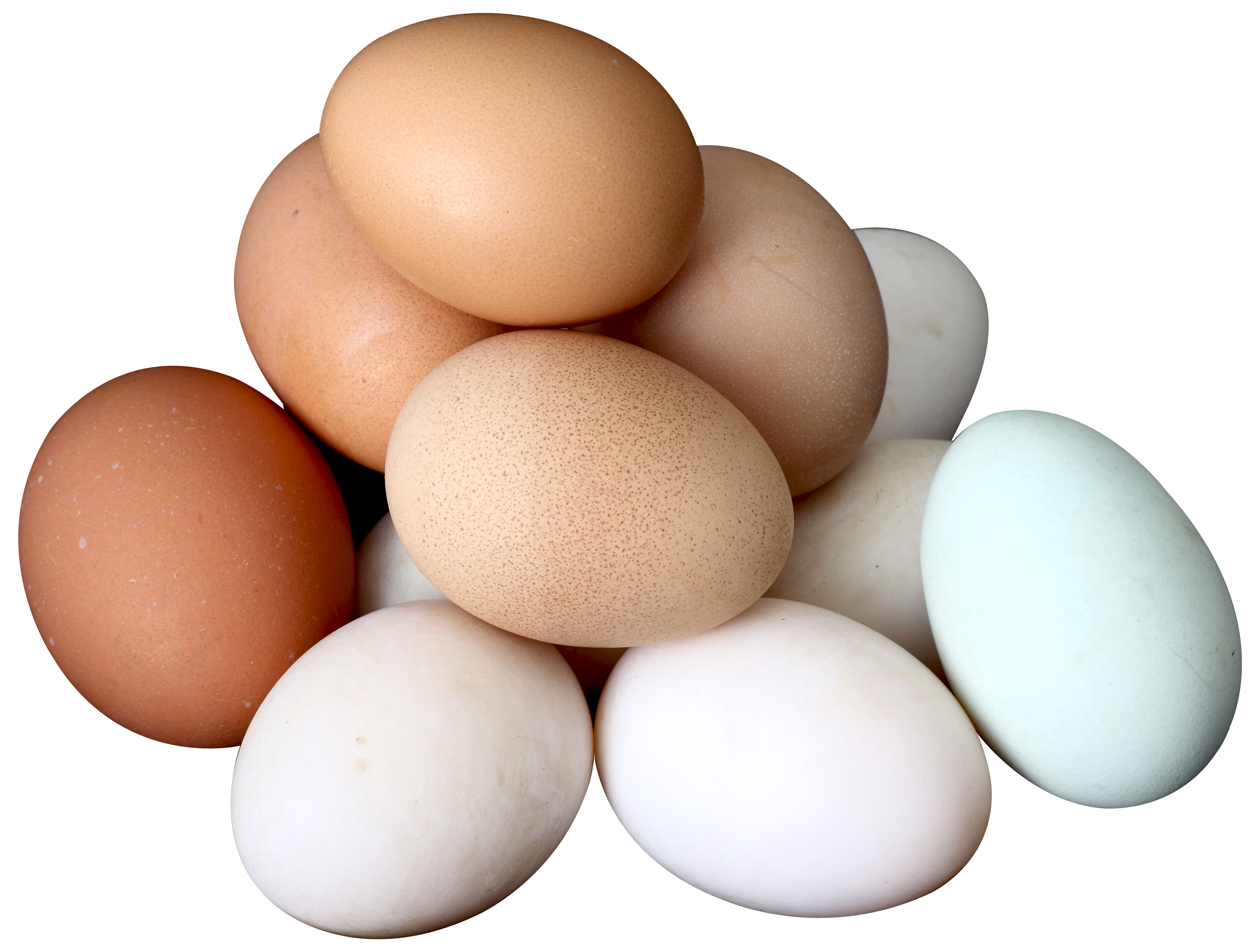 Egg PNG - 18567