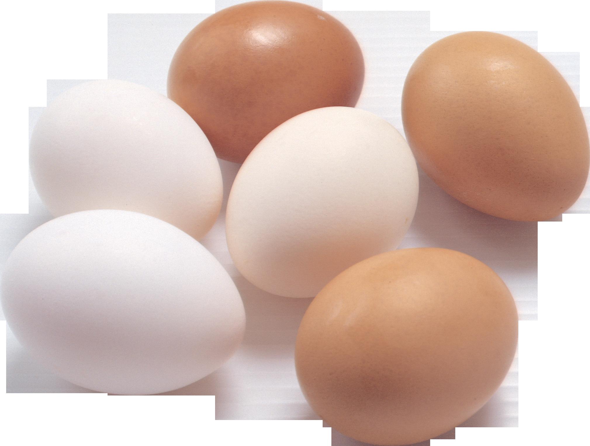 G egg
