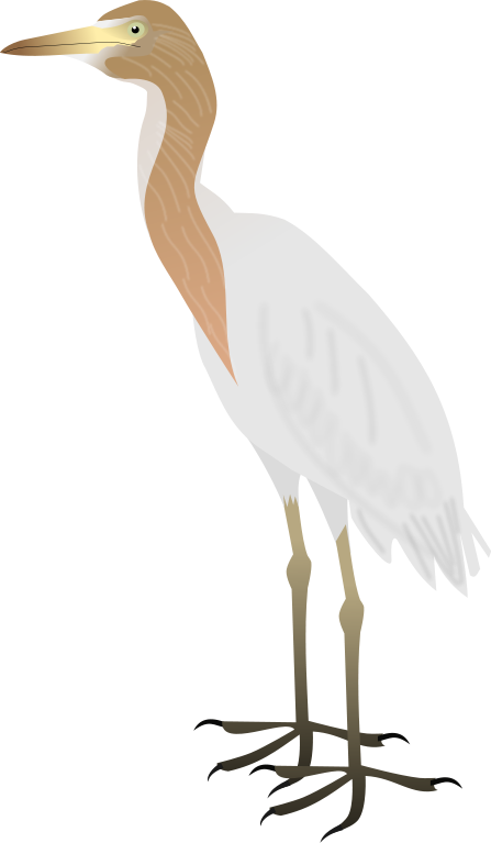 File:Cattle Egret.svg - Egret PNG HD