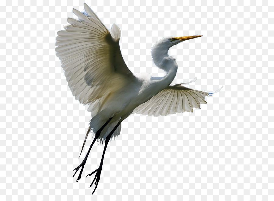 Heron Egret Bird Crane Clip Art - Macaw - Egret PNG HD