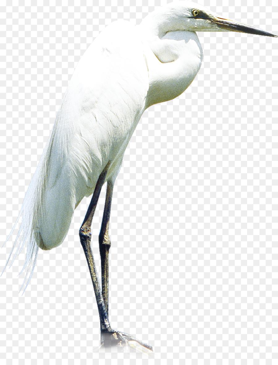Heron Little Egret Great Egret - Crane - Egret PNG HD