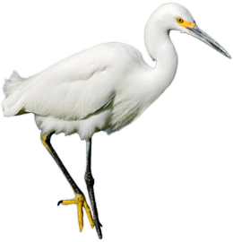 Image Not Available - Egret PNG HD