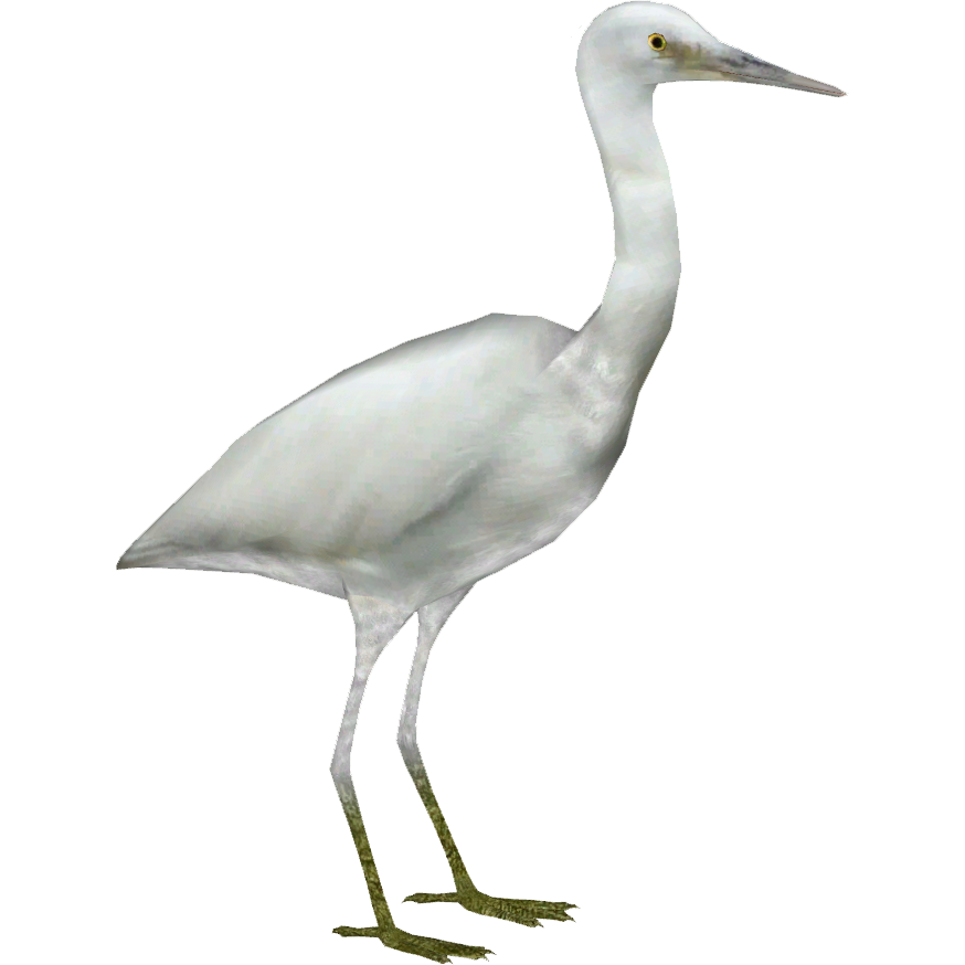 Pacific Reef Heron (Whalebite)2.png - Egret PNG HD