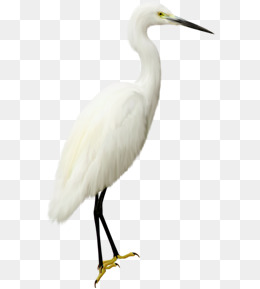 White Seabirds, Cartoon, Hand Painted, White PNG Image And Clipart - Egret PNG HD