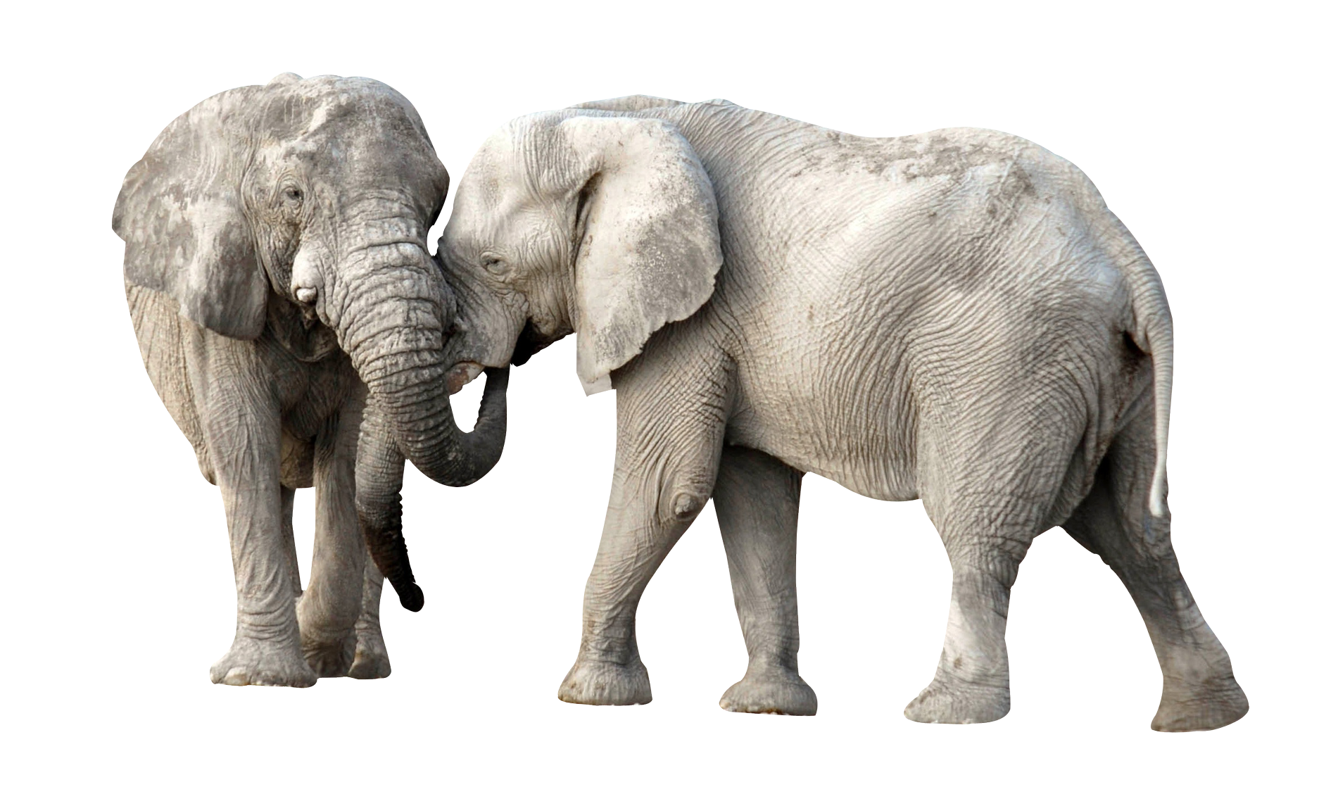 Elephant PNG - 13352