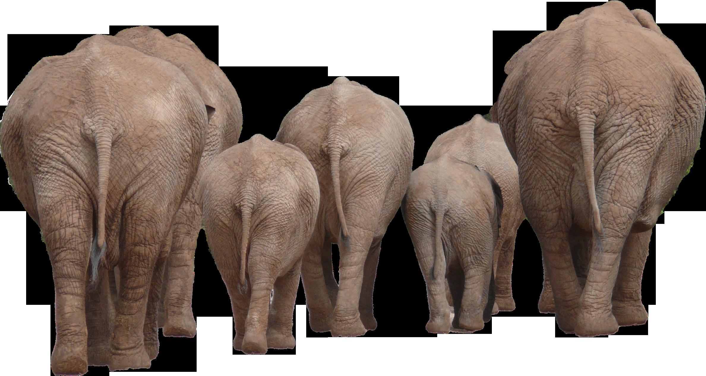Elephant PNG - 13354