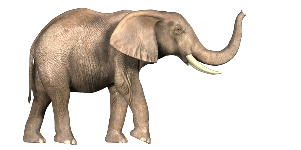 Elephant Photo Png image #43244 - Elephant PNG