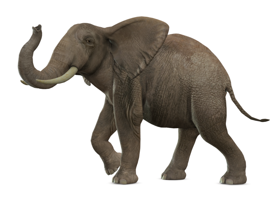 Elephant Picture PNG Image - Elephant PNG