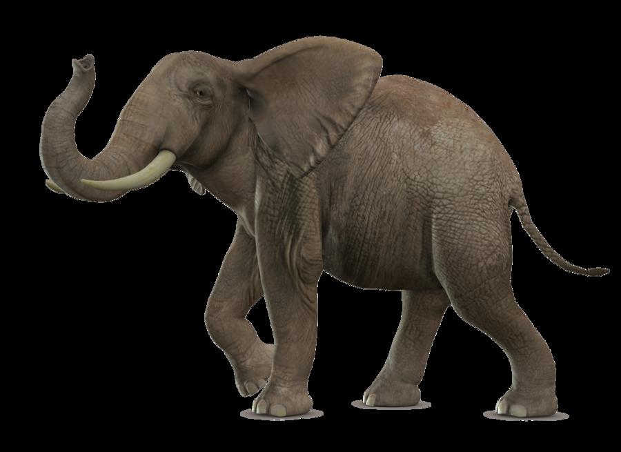 Elephant PNG - 13341