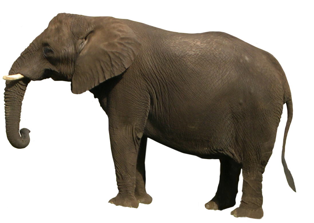 Elephant PNG - 13349