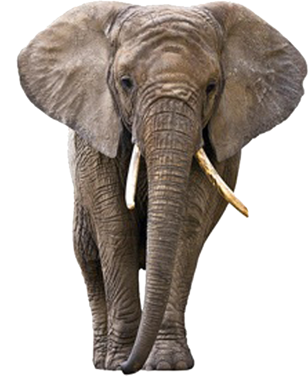 Elephant PNG - 13346